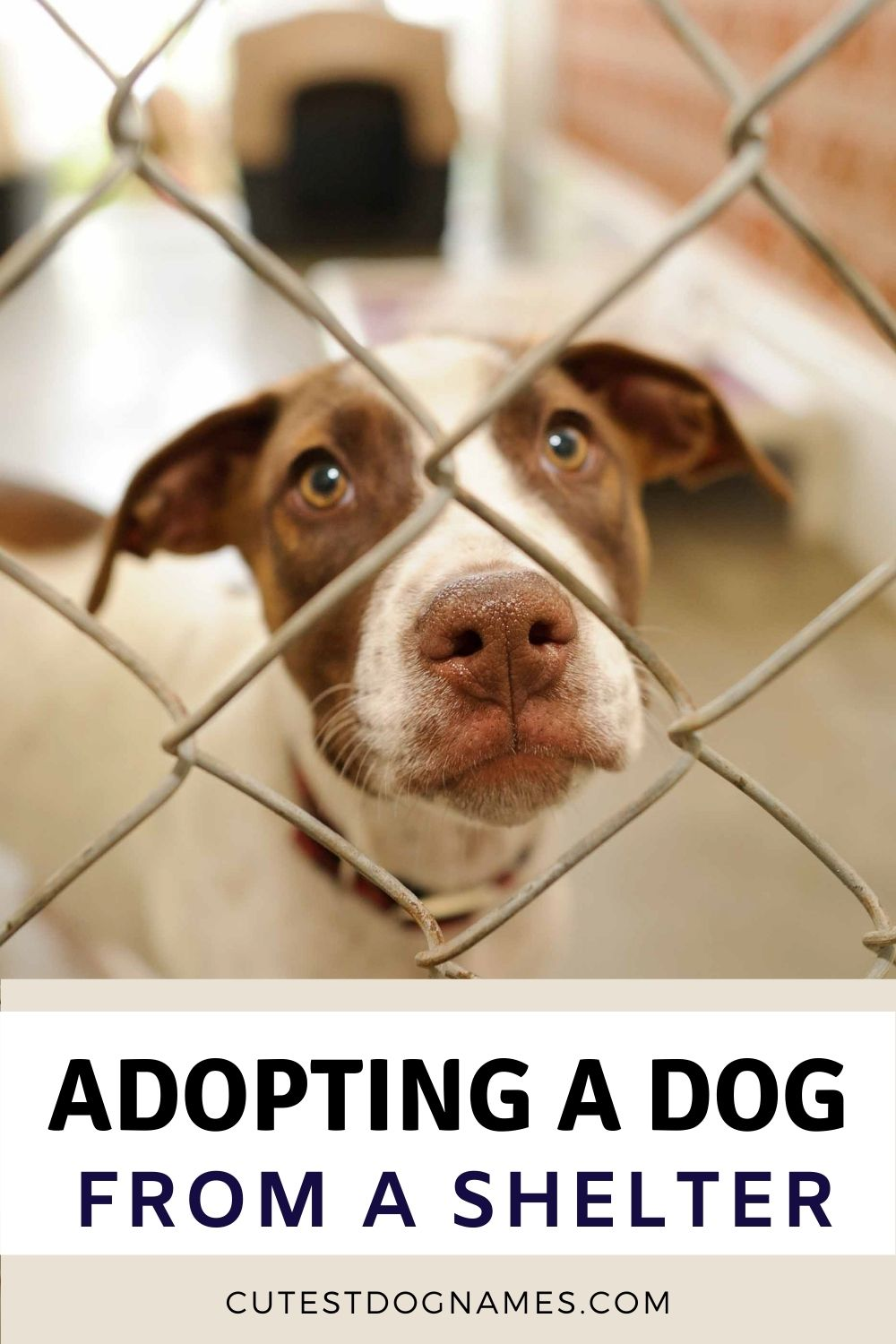 brown and white dog looking through wire fence - adopting a dog from a shelter