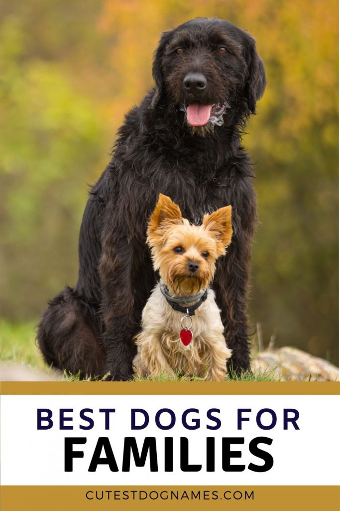 What are the best dog breeds for families? Black dog with little Yorkie