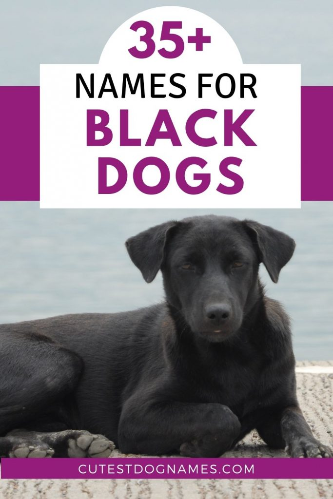 black dog lying on pier - black dog names