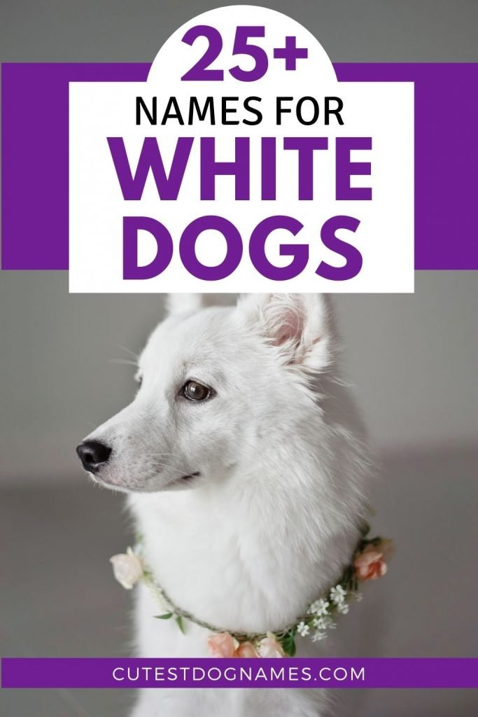 White shepherd dog profile with gray background - names for dogs that are white