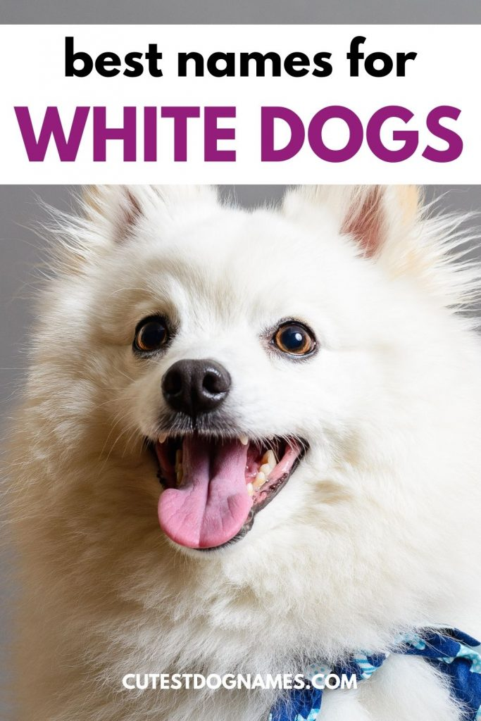 The best names for white dogs - white fluffy dog sitting and looking up